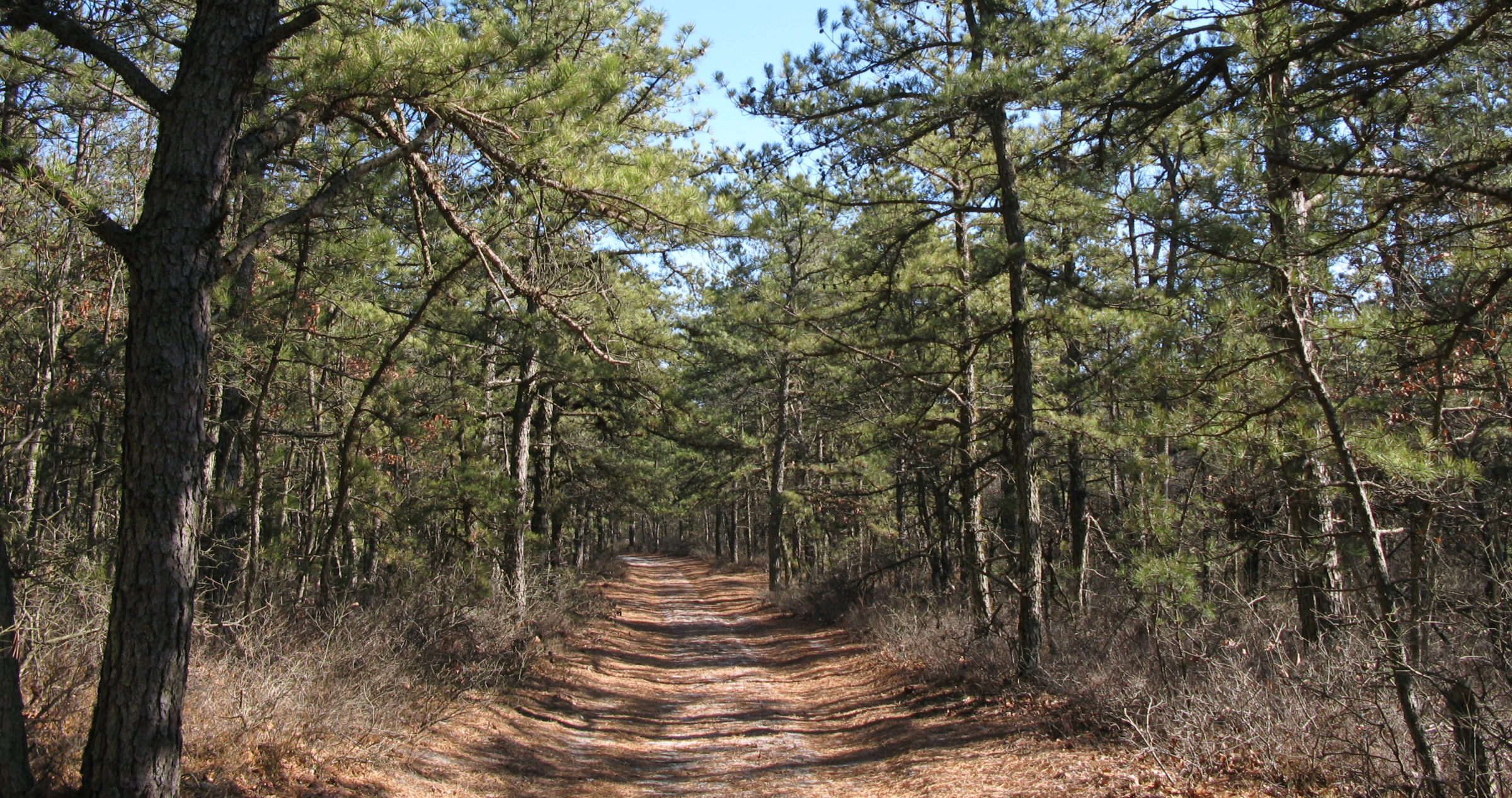 Trail in the Pine Barrens