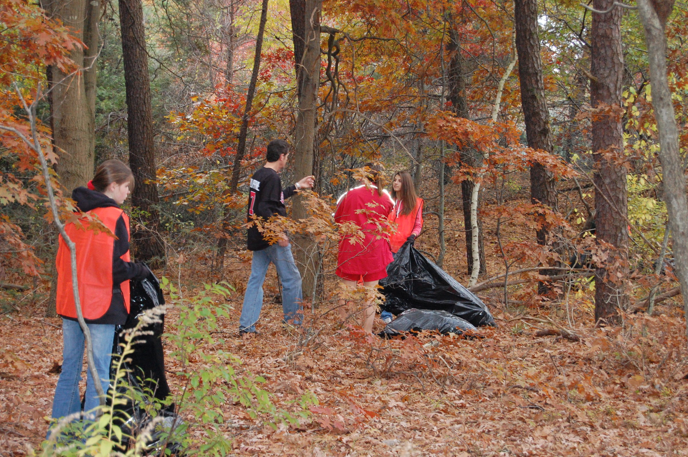 Group of volunteers picking up debris in the Long Island Pine Barrens