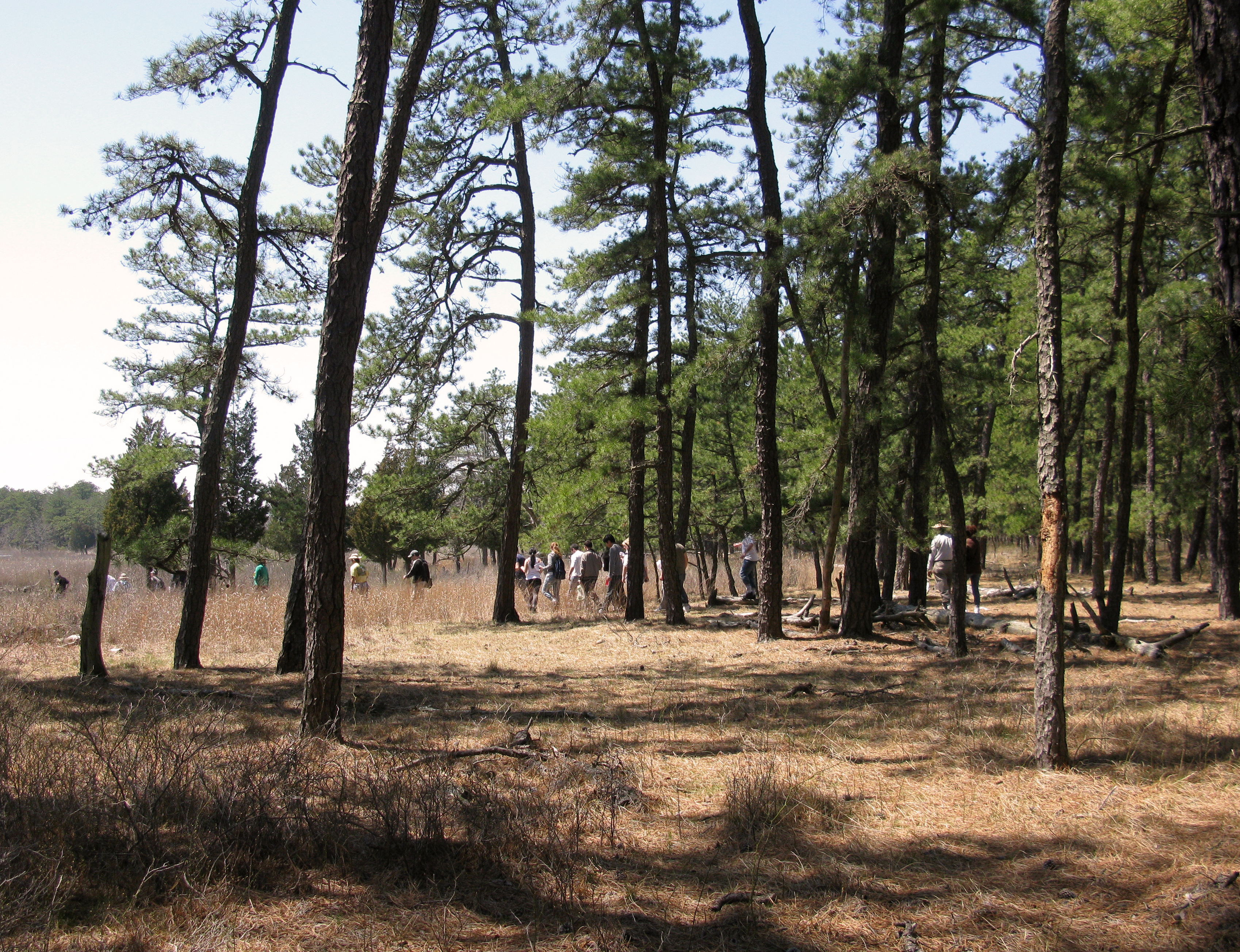 People hiking together in the Long Island Pine Barrens