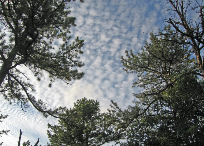 Long Island Pine Barrens Sky