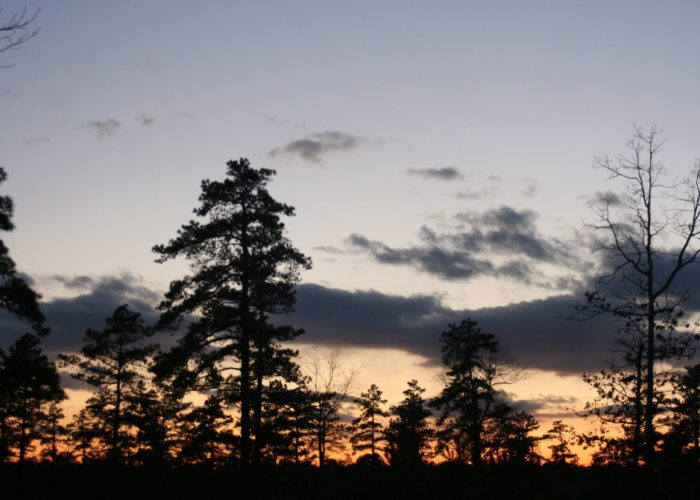 Long Island Pine Barrens Sunset