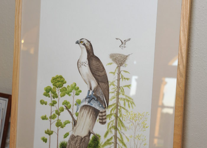 Dennis Puleston painting of an osprey up for auction at the Pine Barrens Society Gala