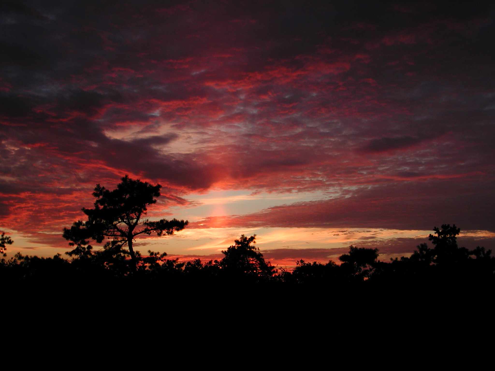 Sunset in the Long Island Pine Barrens