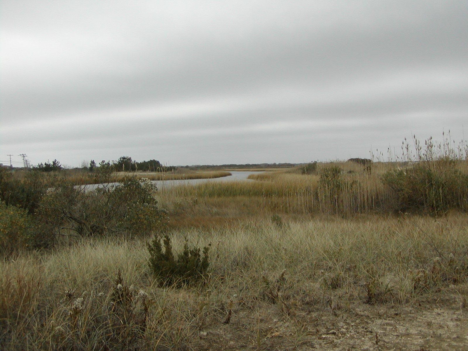Long Island Natural Landscape