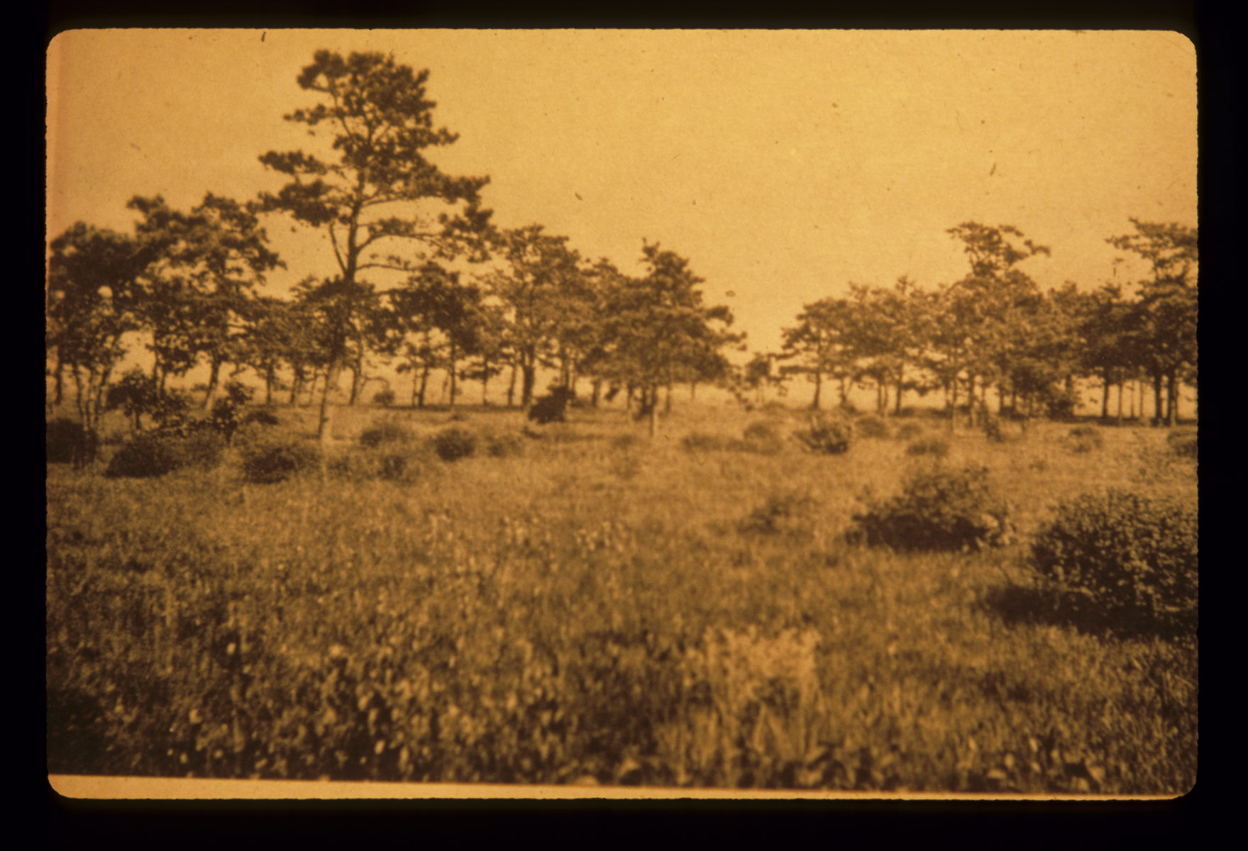 Historical sepia toned photo of the pine barrens