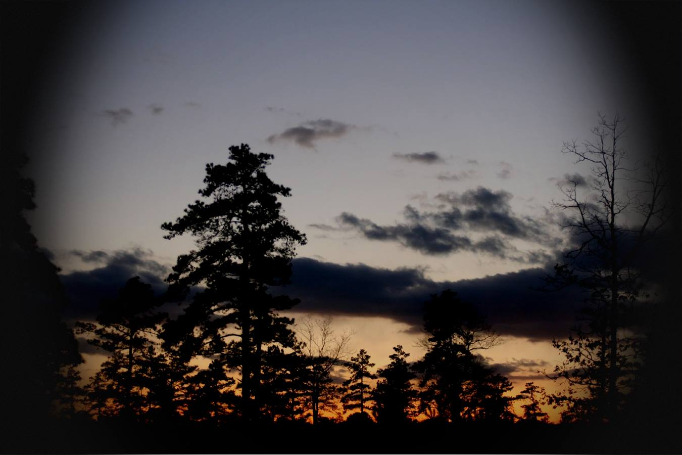 Sunset through the trees of the Long Island Pine Barrens