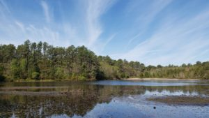 Seed Saturdays: Pine Barrens Plants & Ecology
