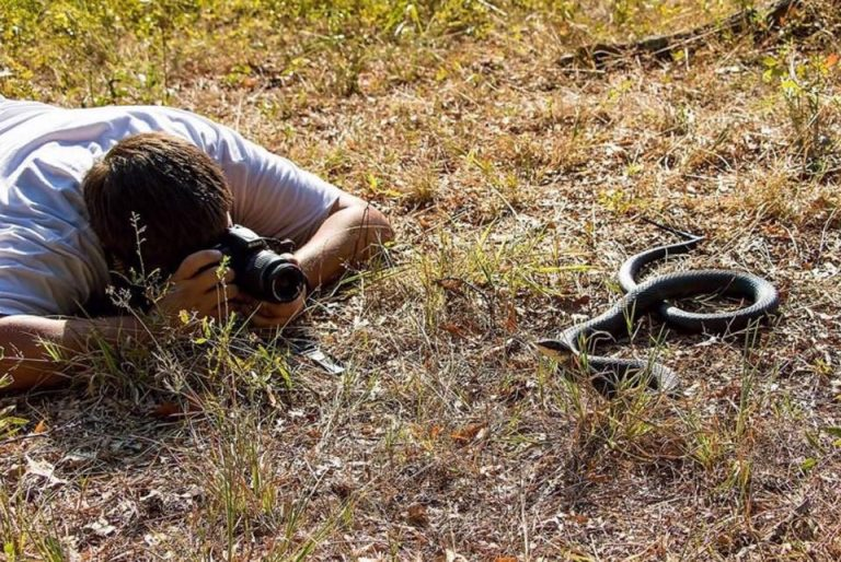 Man taking a picture of a snake