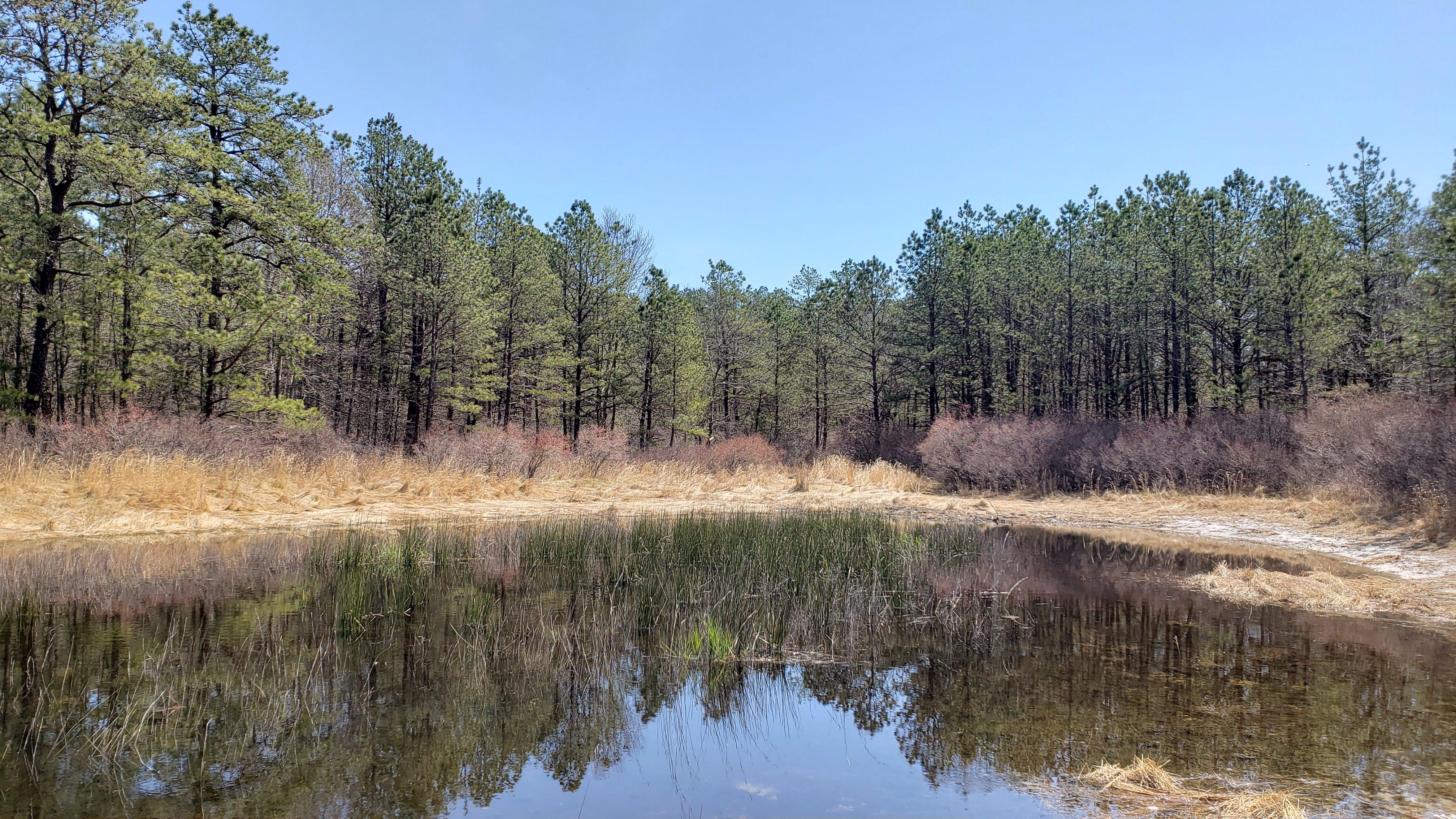 Pond shore of a coastal plain pond