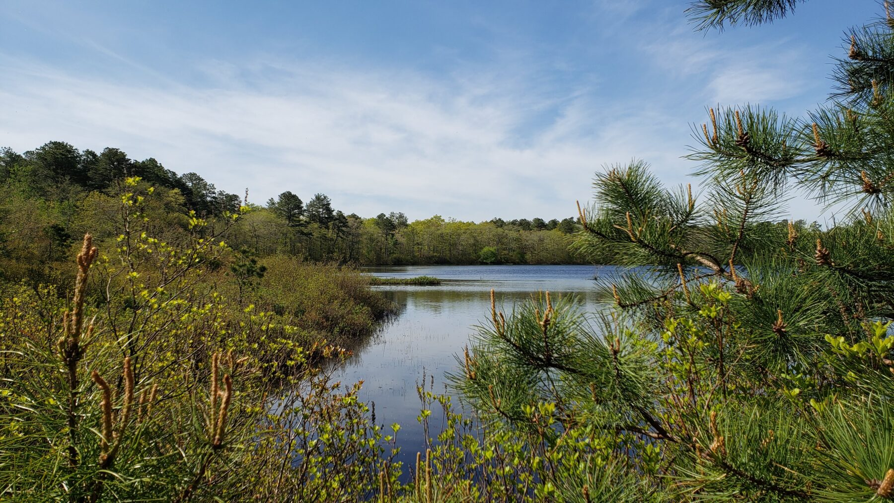 Coastal Plain Pond in the Long Island Pine Barrens
