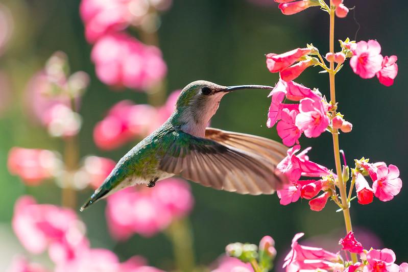 Hummingbirds Have Arrived