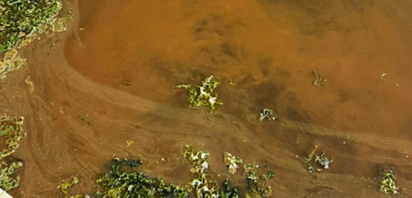 Summer Water Woes
