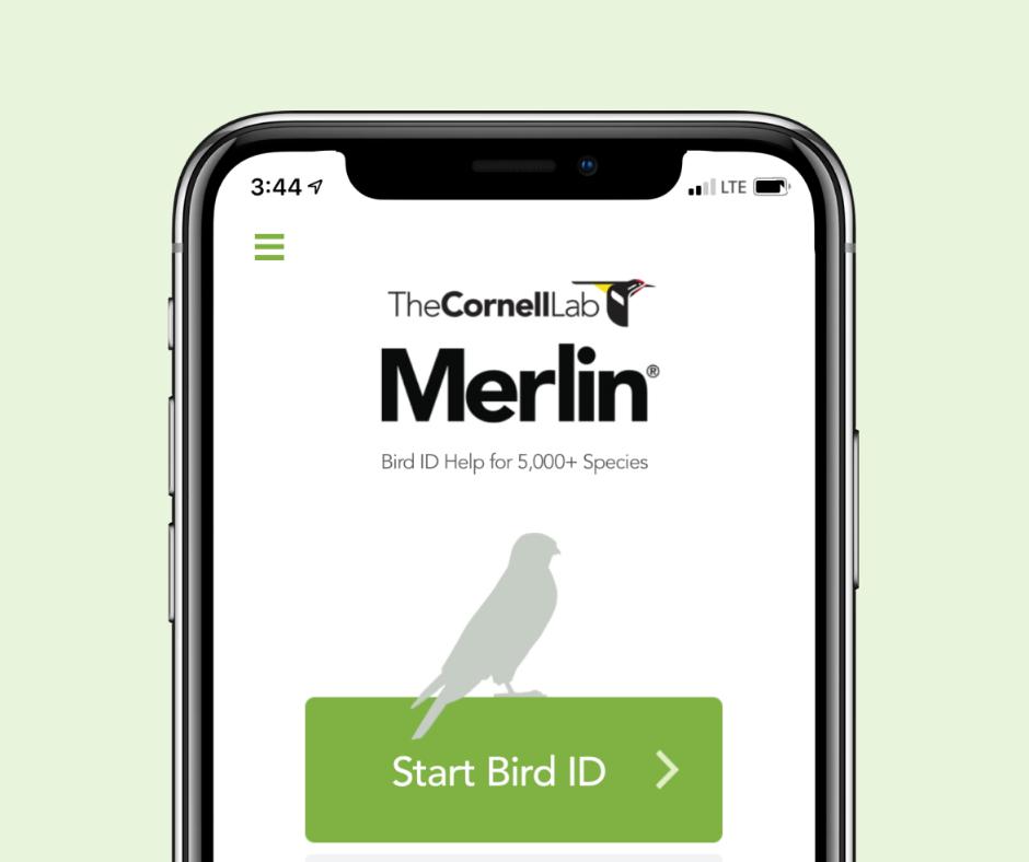 Screenshot of cornell lab merlin bird ID app