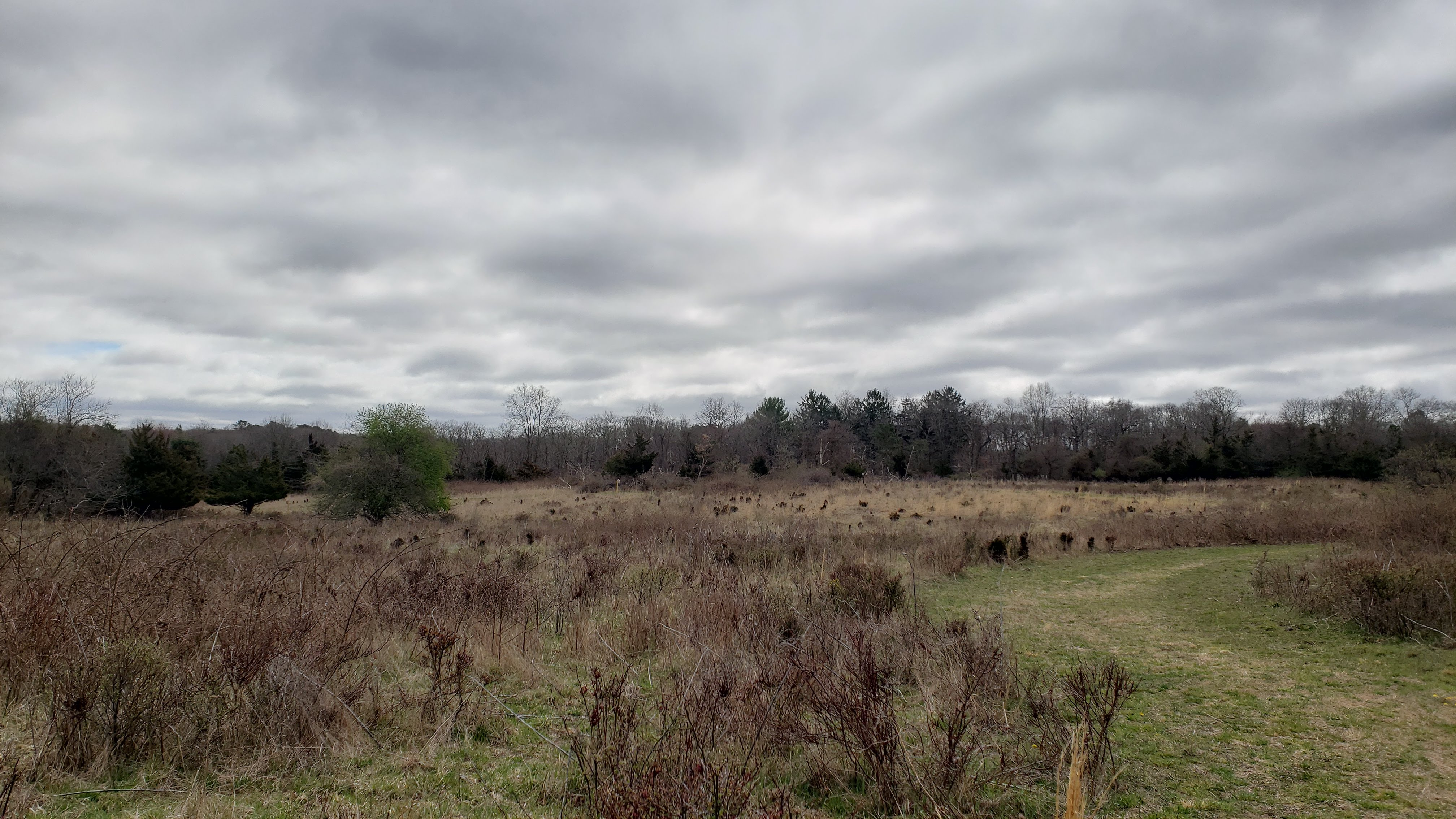 grasslands at ridge conservation area in long island pine barrens