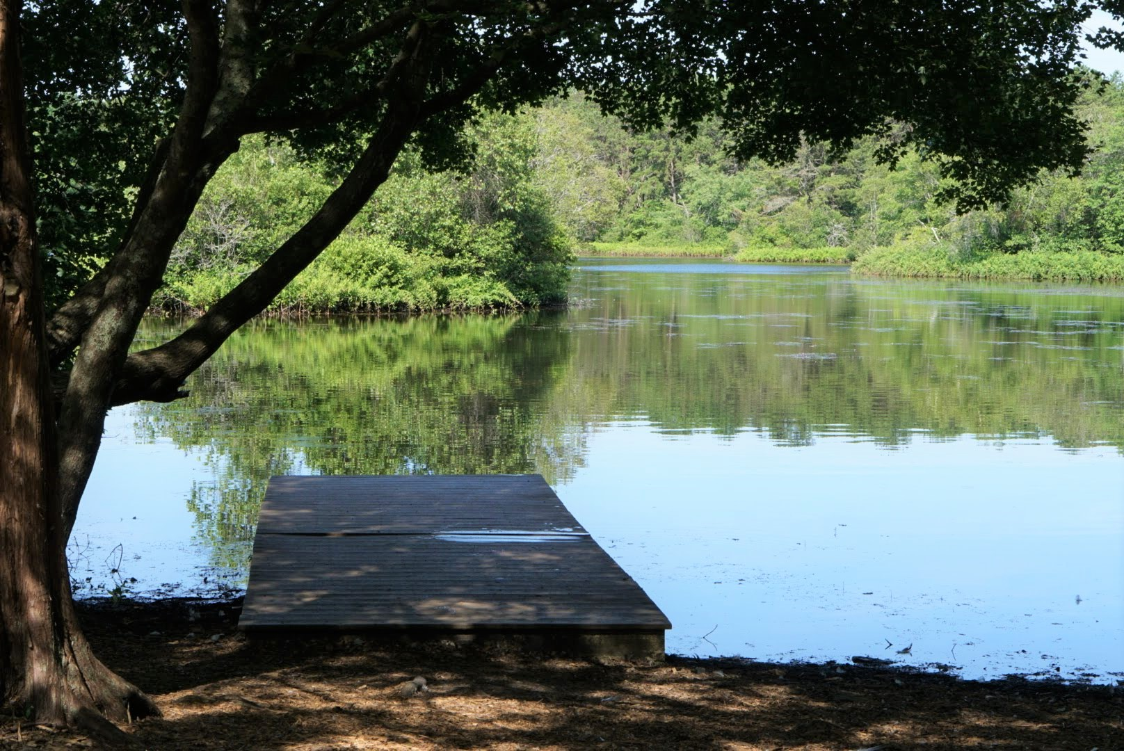 view of old ice pond at quogue wildlife refuge